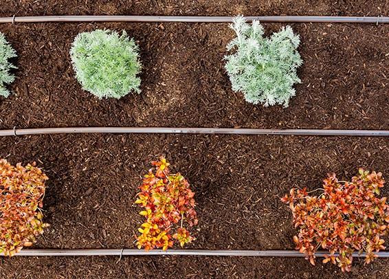 Hệ thống tưới nhỏ giọt tự động theo ống tưới giúp bạn tiếp kiệm thời gian và chi phí chăm sóc cây trồng