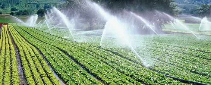 Kỹ thuật tưới tự động tiết kiệm dành cho những vùng khan hiếm nước