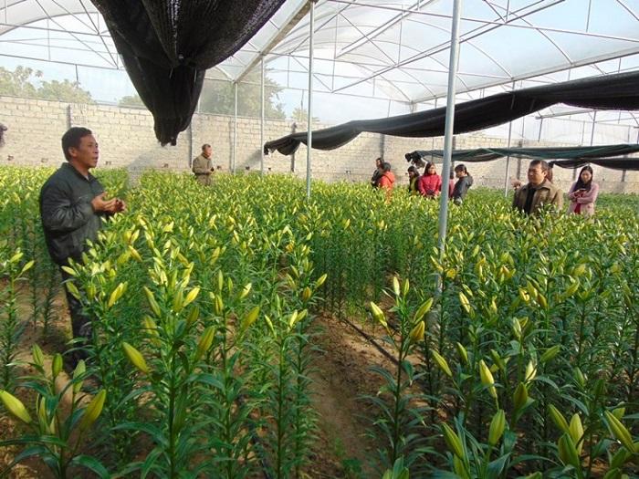Sử dụng phương pháp tưới nhỏ giọt trong trồng hoa
