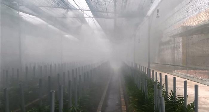 Ứng dụng công nghệ tưới cây tự động trong nhà kính