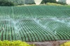 Giải pháp tưới tiêu cây trồng bằng hệ thống tưới tự động tiên tiến